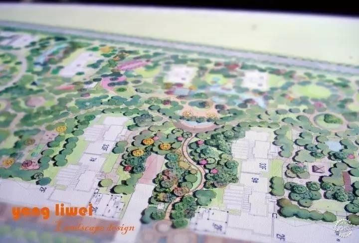 园林手绘平面树形