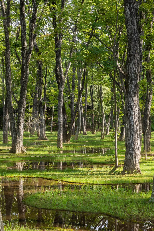 设计与自然的完美结合丨日本水上花园第2张图片